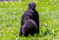 流浪者很好定义了脸型并且从其他狗品种容易地是可区分的:头很好是defi 免版税库存照片
