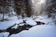 流经一个森林的河在冬天 免版税库存图片