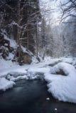 流经一个森林的河在冬天 免版税图库摄影