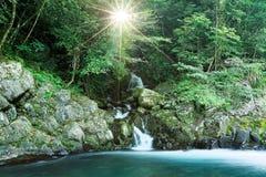 流经入一条小河的可爱的小瀑布在有发光的阳光的一个神奇森林里豪华的绿叶 免版税图库摄影
