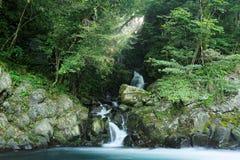 流经入一条小河的可爱的小瀑布在有发光的阳光的一个神奇森林里豪华的绿叶 库存图片
