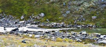 流经在山的小小河谷 库存图片