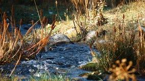 流经干草的小河 影视素材