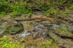 流经森林的小河 免版税库存照片