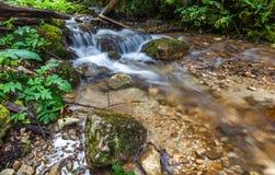 流经森林,森林小河的河流经森林 免版税库存照片