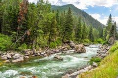 流经蒙大拿的山的重油河 免版税图库摄影