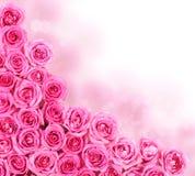 流行粉红玫瑰。边界 免版税图库摄影