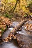 水流量在森林里 库存图片