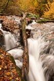 水流量在森林里 库存照片