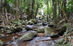 流雨林流瀑布 库存图片