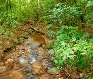 流经岩石的小河在密林 免版税库存图片