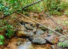 流经岩石的河在密林 库存图片