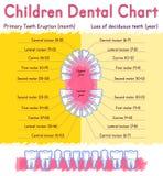 流洒显示牙的解剖学儿童牙齿爆发计时称谓 免版税库存图片