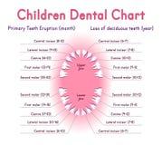 流洒显示牙的解剖学儿童牙齿爆发计时称谓 免版税图库摄影