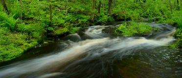 流经森林的小河全景射击 库存照片