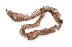 流洒皮肤的蛇顶视图 免版税库存图片