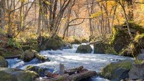 流经秋天森林的神奇Oirase小河  图库摄影