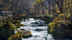 流经秋天森林的神奇Oirase小河  免版税库存图片