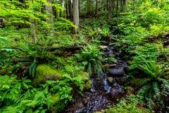 流经美丽的原始雨林的一条水晶小河 库存图片