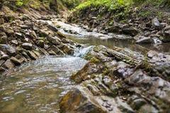 流经绿色森林的山河 库存照片
