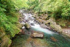 流经豪华的绿叶的一个神奇森林一条迅速小河 免版税库存图片