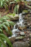 流经雨林地板, Capilano公园的山小河, 库存图片