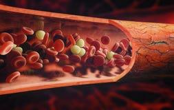 流经静脉的血细胞 皇族释放例证