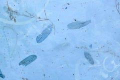 浅兰的被按的植物背景 库存图片