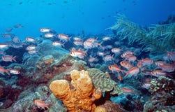 浅加勒比的礁石 图库摄影