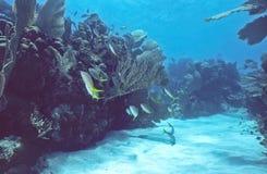 浅博内尔岛的礁石 免版税库存图片