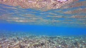 浅岩石礁石 影视素材