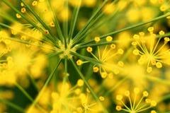 浅抽象构成深度莳萝领域的花 库存图片