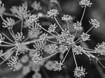 浅抽象构成深度莳萝领域的花 免版税库存照片