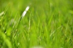 浅抽象背景刀片深度重点前面的草绿色 图库摄影
