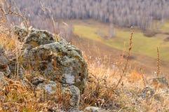 浅景深岩石石头视图用地衣盖的围拢由在柔和的小山的黄色秋天草 免版税库存照片