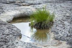 浅池水在干旱的地形 库存照片
