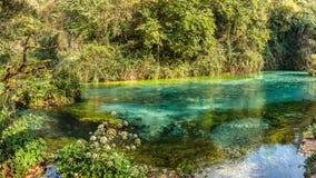 浅河在春天森林, Bistice河的来源里,在Bl附近 免版税库存图片