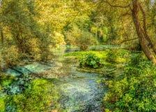浅河在春天森林, Bistice河的来源里,在Bl附近 免版税图库摄影