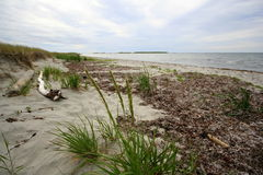 浅海湾的海滩 图库摄影