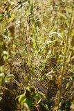 浅深度的域 被弄脏的秋天背景 秋天植物 天鹅绒季节 草的狂放的领域在日落的,软的太阳发出光线 图库摄影