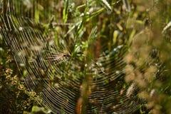 浅深度的域 被弄脏的秋天背景 秋天植物 天鹅绒季节 草的狂放的领域在日落的,软的太阳发出光线 免版税库存图片