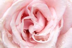 浅粉红色上升了 免版税库存图片