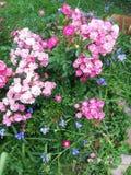 浅粉红色和蓝色 免版税库存图片