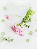浅粉红色的春天ranunkulus在大理石背景,顶视图开花 免版税库存图片