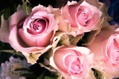 浅粉红色的玫瑰特写镜头从上面 库存照片