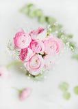 浅粉红色的ranunkulus在大理石背景,顶视图开花 库存图片