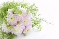 浅粉红色花束的雏菊 库存图片