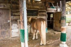浅褐色的马在马厩 免版税库存图片