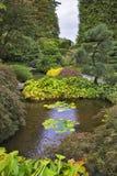 浅迷人的池塘 库存照片