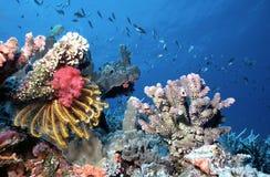 浅马尔代夫的礁石 库存照片